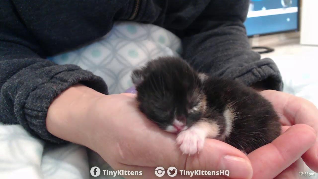 Tiny cleft palate kitten Aura, asleep in my hand - TinyKittens.com