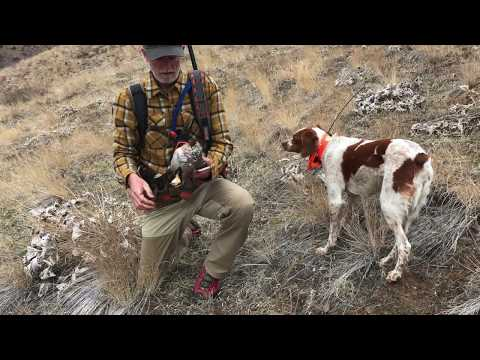 Chukar Dog Backing