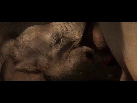 When Elephants Were Young Trailer 2016