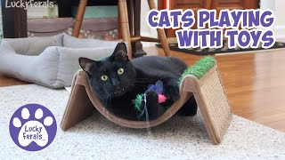 Cat Play Time * S4 E101 * Cats Playing With Toys  Look At Those Fangs!