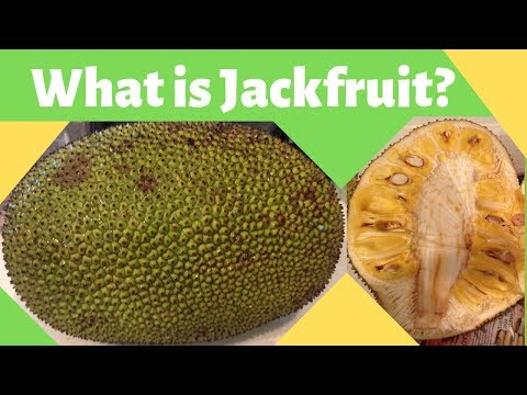 What is Is really a Jackfruit A Glance Inside This Funky Fruit