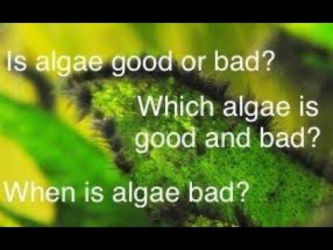 The Benefits Of Algae In Your Aquarium