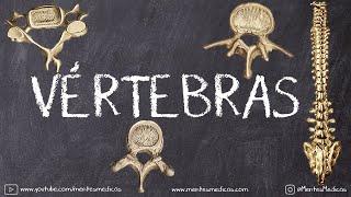 Vértebras Anatomía ¡Fácil Cuadro Comparativo!   Mentes Médicas