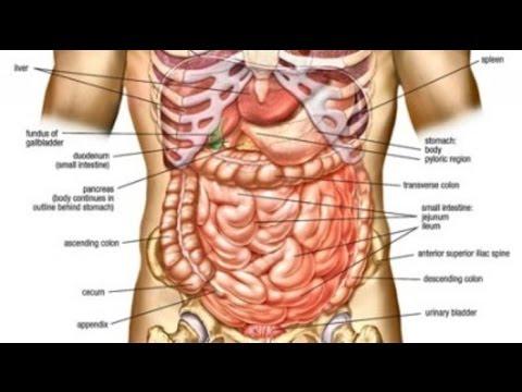 Medical mcqs anatomy question no1 youtube medical mcqs anatomy question no1 ccuart Choice Image