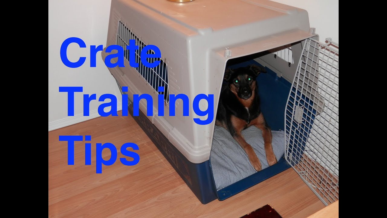 Crate Training Pitbulldefault1