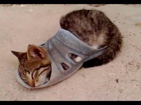 Видео про кошек -
