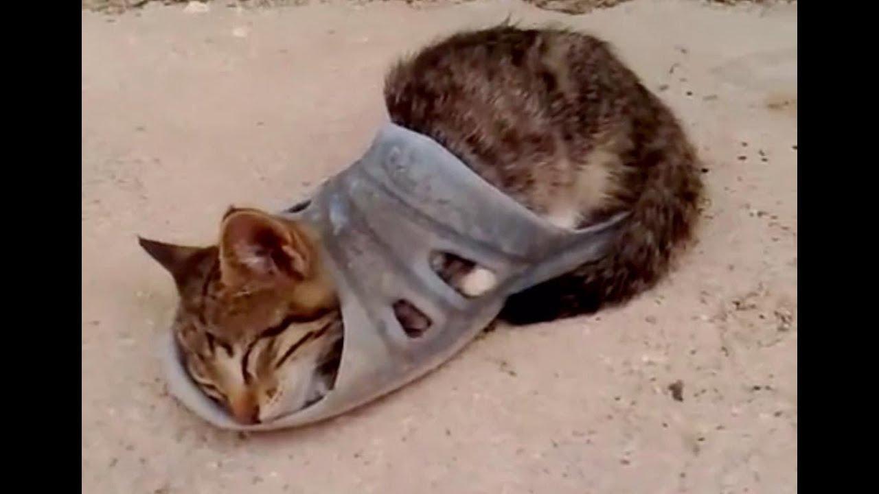 Смешные лежащие коты