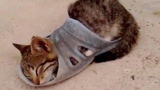 Как спят кошки. Смешное видео про кошек(Смешные кошки спят | Кошка спит | Кошка смешно спит | Кошка спит на хозяине | Кошка спит на батарее | Котенок..., 2014-06-28T12:00:15.000Z)