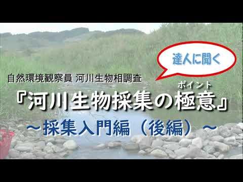 河川生物相調査 水生生物採集入門(後編)