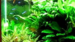 Beautiful 90 Gallon Fish Tank With Live Plants