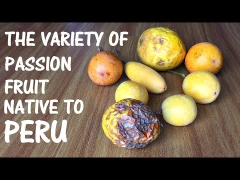 Passion fruit found in Peru (Vlog 20)