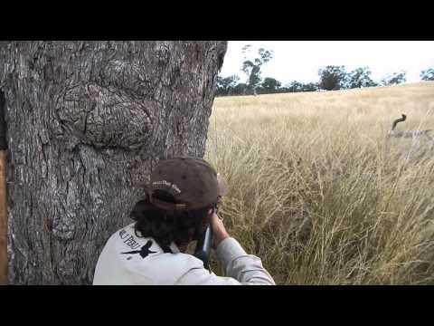 Rusa hunting HavagoAustralia.
