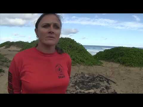 Download Kaena Point Vehicle Access