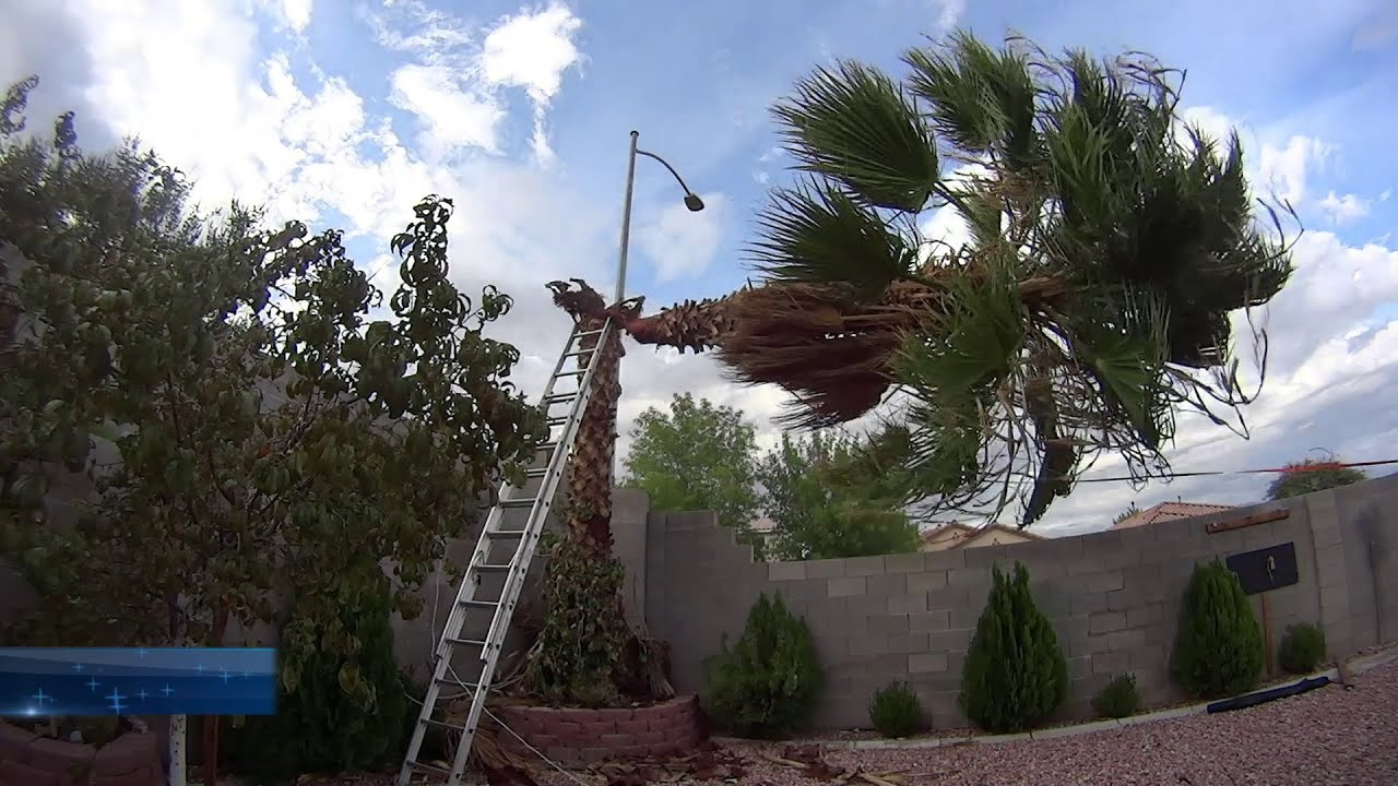 Cutting Down A Palm Tree In Las Vegas  Youtube. Best Credit Card Deals For Students. Online Marketing Analytics Tools. The Best Conditioner For Curly Hair. Fertility Doctors Los Angeles. Medical Insurance Billing Web Designers India. Top Cinematography Schools Windows Server Vps. Bad Credit Debt Consolidation Loans Unsecured. Law Firm Document Management Software