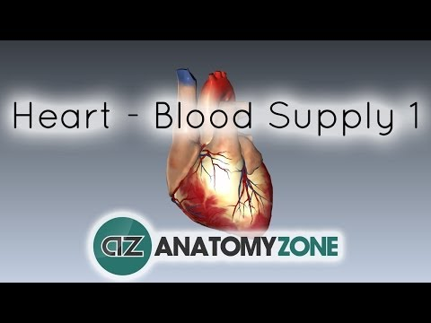 Blood supply to the heart - PART 1 - Anatomy Tutorial