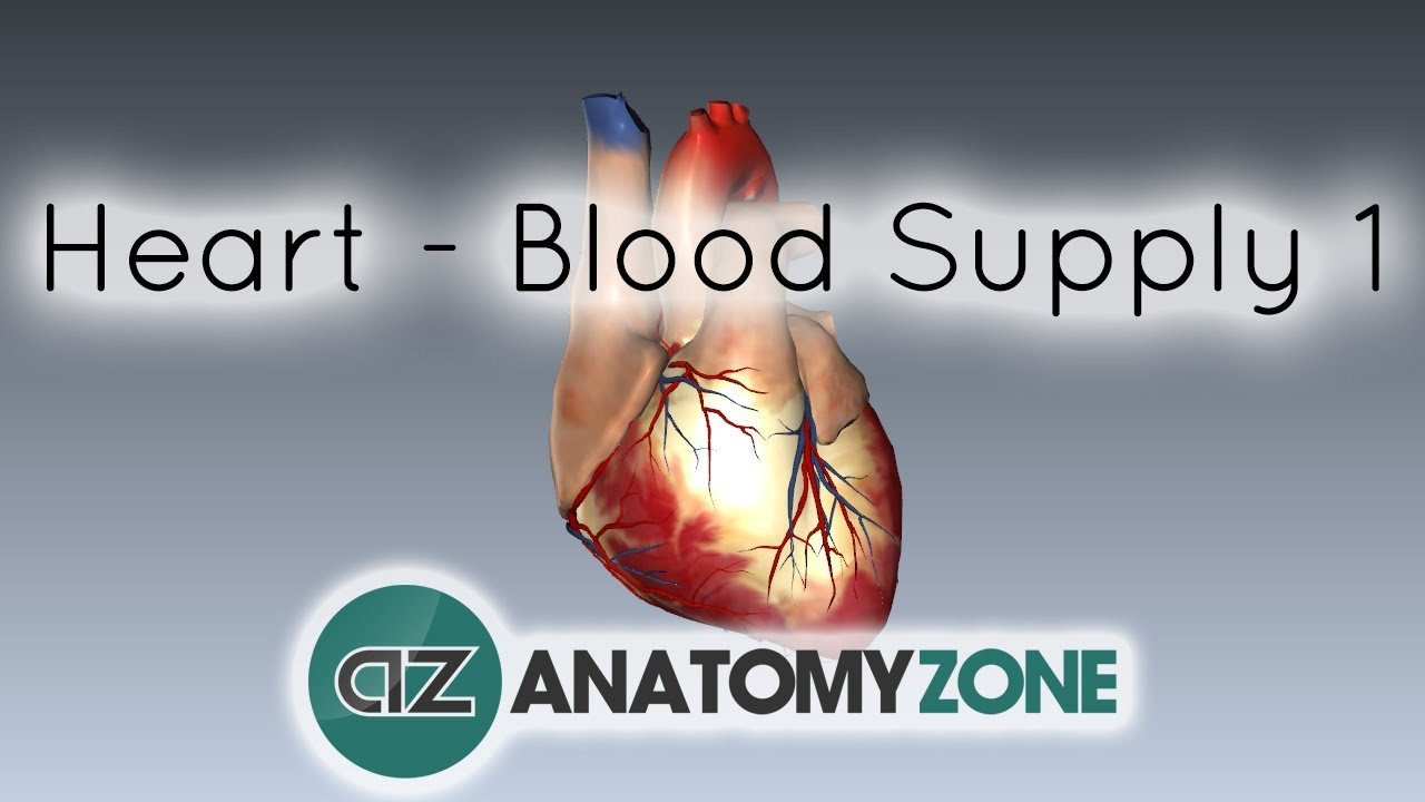 Blood supply to the heart - PART 1 - Anatomy Tutorial - YouTube