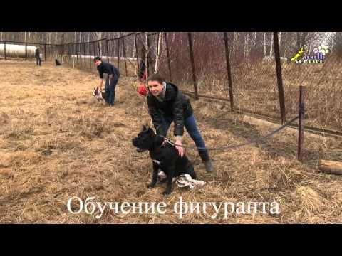 ЧОП «ЮГ-Дельта»: охранные услуги в Москве