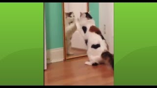 Absolute Laugh| Maximum interesting dog, fail Animals collection