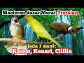 Masteran Murai Trotolan Masteran Dasar Jernih  Mp3 - Mp4 Download