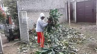 Unang Pamungkas Sibuk Mengangkut dan Membakar Batang Pohon by Kamil Reoga