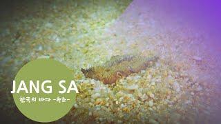 [스쿠버다이빙,scubadiving][코브라다이브,cobradive] -속초 장사항 비치 다이빙-