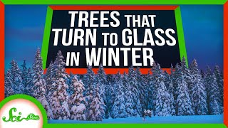 3 Extreme Ways Trees Survive the Winter