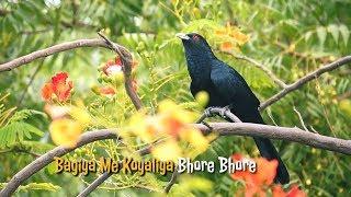 Best Islamic Naat Whatsapp status video 🌹💟Bagiya me koyaliya Bhore Bhore Naat