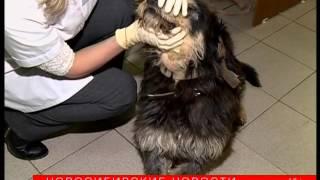 Безнадзорные животные: куда обращаться в Новосибирске