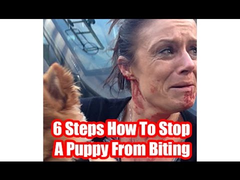 6-steps-how-to-stop-a-puppy-from-biting