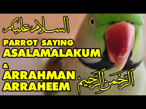 Talking Parrot in Urdu/Hindi/Arabic | Asalamalakum | Arrahman Arraheem | Bolne Wala Tota