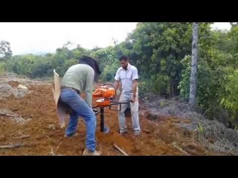 Planting coconut