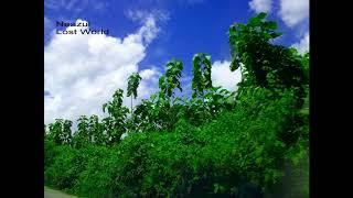 Pawa Na Pawar Kulete -  Shawkat Hayat Khan