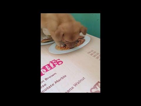 Welpe versteht nicht, dass sein Fressen nur ein Foto ist
