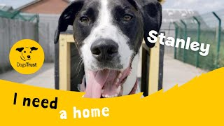 Stanley the smart English Pointer | Dogs Trust Leeds