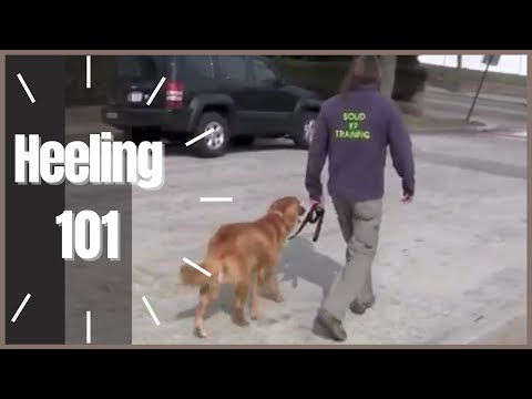 Heeling 101 How To Solid K9 Training Youtube