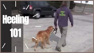 Heeling 101 How To- Solid K9 Training