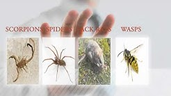 Top Rated PEST CONTROL Company in TUCSON AZ | TUCSON PEST CONTROL | AZPest.com | 520-886-7378