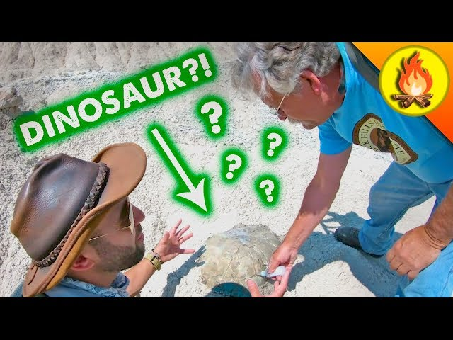What's Beyond Dinosaurs?
