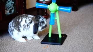 Bunny & Inteligence Activity Toy  - Windmill