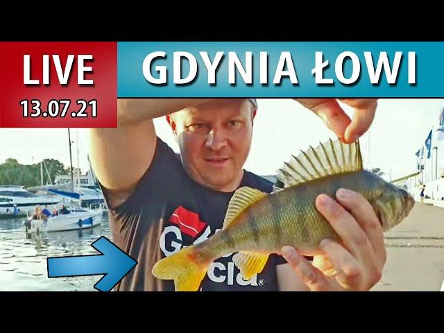 LIVE ➤ DUŻY OKOŃ z Gdyni - marina jachtowa