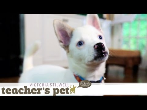 Potty Training a Puppy   Teacher's Pet With Victoria Stilwell