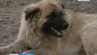 В Красноярске готовится к открытию самый крупный приют для бродячих собак