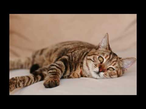 Care For Cats - Vomiting With Bile In Cats - Cat Tips