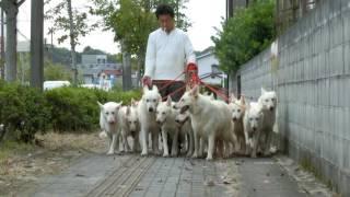 犬使いになりたい人へ ブログ:http://ameblo.jp/ekushii/