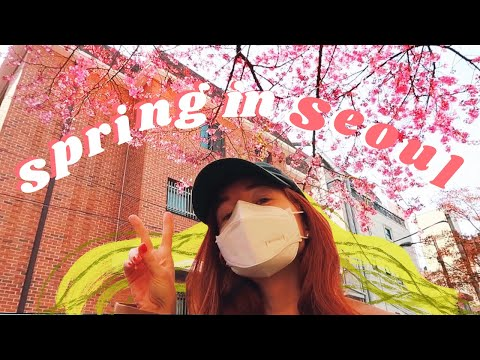 SPRING IS HERE 🌸 a simple week of my life in seoul, korea vl