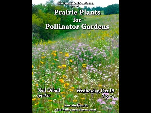 Gardening With Native Plants By Neil Diboll