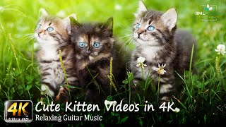 Kittens 4K  Cute Kitten Videos in 4K  Most Adorable Pets of all time