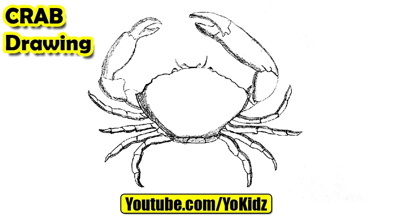 How to draw a Crab - YouTube  How to draw a C...