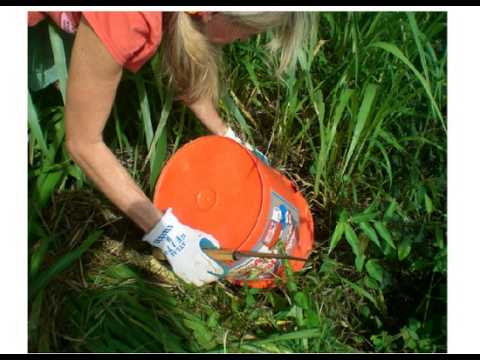 Guinea Grass removal in 3 easy steps