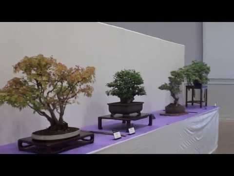 2013 rebs bonsai show Santa Rosa,CA # 1 of 8